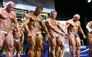 musclebull: competitor no 319 - nabba austrian